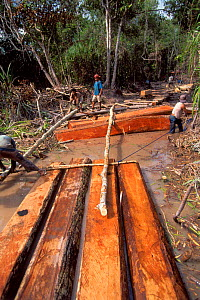 Logging operations in Tanjung Puting NP, Central Kalimantan, Borneo, Indonesia - Karl Ammann
