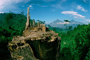 Deforestation for fuel by Hutu refugees. Virunga NP. Congo 900 tons of wood cleared per day. - Jabruson