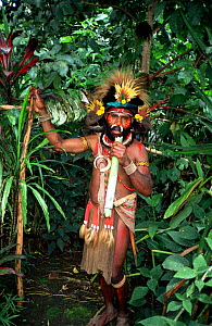 Traditional Huli land owner in medicinal plant garden, Tani valley, Papua New Guinea - Phil Chapman