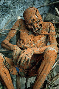 Enga 'Smoked body' of man under cliff Aseki, Papua New Guinea, 1991 - Phil Chapman