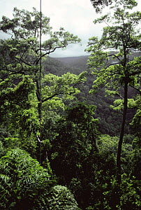 Rainforest habitat of Monkey eating eagle {Pithecophaga jefferyi} Phillipines - Michael W. Richards