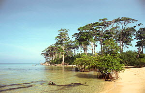 Littoral tropical rainforest on coast, Wandoor Marine NP, Andaman Islands, Indian Ocean.  -  Ian Lockwood