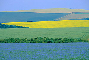 Arable crops in patchwork landscape. Oil seed rape, wheat and Flax. Wiltshire, UK linseed  -  Colin Varndell