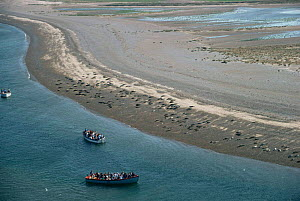 Aerial view of tourists watching Seals from boat, Blakeney point, Norfolk, UK - Martin H Smith