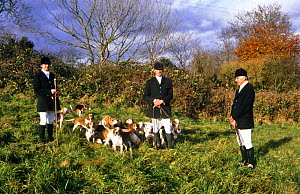 Wick and District Beagle hounds with masters and whipper-in. Gloucestershire, UK  -  WILLIAM OSBORN
