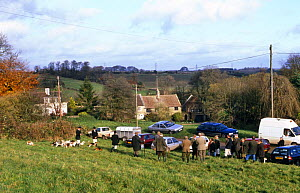 Wick and District Beagle hounds meet at West Littleton, Gloucestershire, UK  -  WILLIAM OSBORN