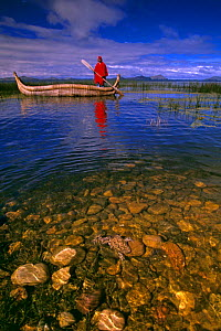 Lake Titicaca with local Indian in traditional reed boat and Giant Titicaca frog {Telmatobius culeus} in foreground, captive release, Bolivia - Pete Oxford