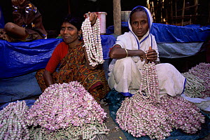 Ladies selling rose garlands in flower market, Calcutta, West Bengal, India - Pete Oxford