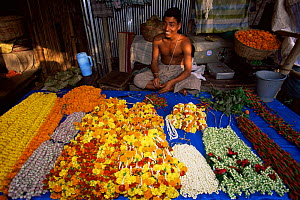 Man selling flower garlands in flower market Calcutta, West Bengal, India - Pete Oxford