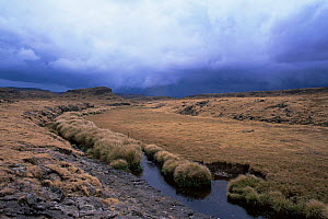 Grassland and River in Bale Mountains National Park, Ethiopia  -  Elio Della Ferrera
