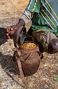 Wild honey collected from tree, Harenna forest, Bale Mountains NP, Ethiopia, East Africa  -  Elio Della Ferrera
