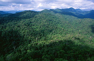 Looking out across Sinharaja forest reserve with {Shorea sp} trees in tropical rainforest canopy, Sri Lanka  -  Elio Della Ferrera