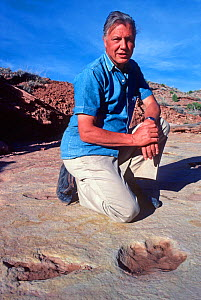 Portrait of Sir David Attenborough sitting next to dinosaur tracks whilst filming for 'Lost Worlds Vanished Lives', Utah, USA, 1989  -  NEIL NIGHTINGALE