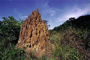 Termite mound cooling chimneys - savanna near Mboko, Odzala National Park, Congo  -  Jabruson