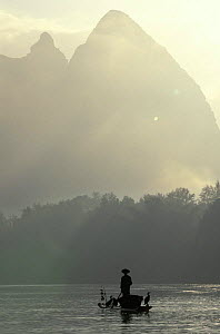 Fisherman with trained cormorants {Phalacrocorax carbo} in mist, Li river, Guangxi, China  -  Pete Oxford