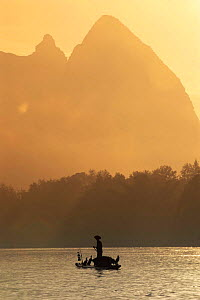 Fisherman with trained cormorants {Phalacrocorax carbo} in mist Li river, Guangxi, China - Pete Oxford