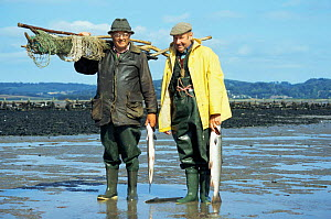 Salmon caught in pulchers, traditional method, Severn estuary, Glos, UK. Deryck Huby and Donald Riddle  -  WILLIAM OSBORN