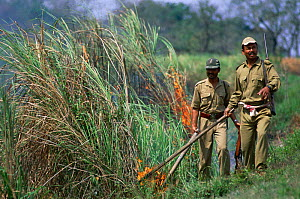 Forest guards starting fires to stimulate the growth of Elephant grass, Kaziranga NP, Assam, India - Bernard Castelein