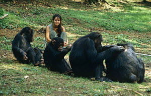 """Charlotte Unlenbroek with Chimpanzees {Pan troglodytes} in Gombe, Tanzania. On location for BBC television series """"Cousins"""", 1999  -  Miles Barton"""