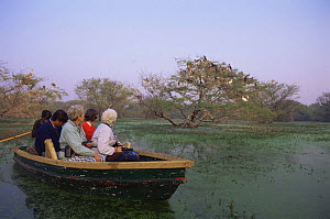 Tourists watching Painted storks {Mycteria leucocephala} from boat, Keoladeo Ghana NP, Bharatpur, India  -  Nick Garbutt