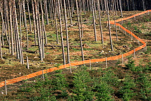 Deer fence protects tree plantation from damage from grazing deer. Red tape reduces Grouse collision, Highlands Scotland, UK - Pete Cairns