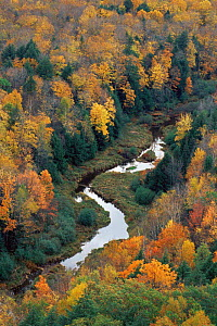 Aeriel view of river in Sugar maple forest {Acer saccharum} Michigan, USA  -  Larry Michael