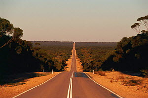 Eyre highway, straight road vanishing into horizon nr Balladonia Roadhouse, Nullarbor, W Australia  -  Steven David Miller