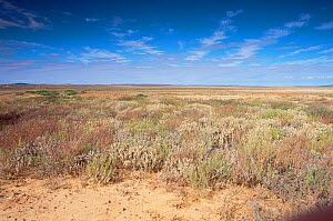 Australian outback scenic -  The Channel Country, far western Queensland, South Australia - WILLIAM OSBORN