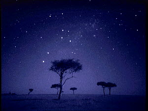 The Southern Cross star constellation shining above Ballenites trees in Masai Mara, Kenya. Starlight image intensifier camera image taken with no artificial light. - Martin Dohrn