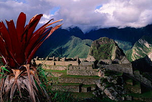 Machu Picchu ruins Andes, Peru. South America - Pete Oxford