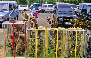 Glass cases  with stuffed animals for sale, Borobudur, Java, Indonesia  -  Toby Sinclair