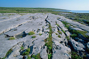 Limestone pavement at Burren NP, County Clare, Republic of Ireland  -  Tim Edwards