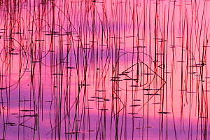 Water and autumn reeds reflections, Michigan USA - Larry Michael