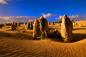 The Pinnacles, remnant columns in an eroded limestone plateau, Nambung National Park, Western Australia - Steven David Miller