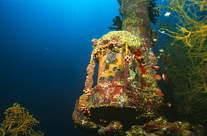 Mast light of Japanese WWII ship, which has formed an artificial reef in the Marovo lagoon, Solomon Islands - Michael Pitts