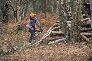 Wood and scrub clearance to conserve woodland. Norfolk, UK  -  Robin Chittenden