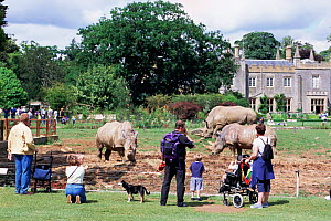 People watching White rhinos at Cotswold Country Park, Burford, Glos, UK  -  Andrew Harrington