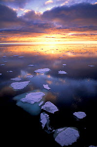 Sunset over Antarctic waters with floating ice, Antarctica - Pete Oxford