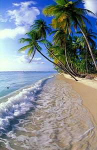 Idyllic beach landscape with pam trees and gentle waves, Pigeon Point, Tobago, Caribbean  -  David Noton