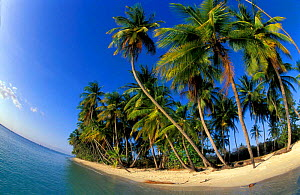 Fish-eye view of tropical island with palms, beach and sea, Pigeon Point, Tobago Caribbean  -  David Noton