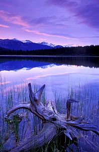 Patricia Lake, Jasper National Park, Alberta, Canada, North America - David Noton