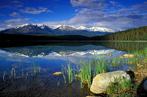 View over Patricia Lake, Jasper National Park, Alberta, Canada, North America - David Noton