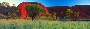 Panoramic view of Ayer's rock (Uluru) Northern Territories, Australia - David Noton