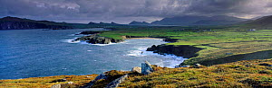 Panoramic view of the Dingle Peninsula, County Kerry, Southern Ireland  -  David Noton
