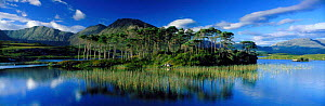 Panoramic view of Pine Island, Connemara, Co Galway, Southern Ireland  -  David Noton