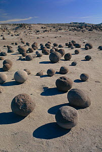 Ball-shaped sandstone formations produced by wind and rain erosion. Ischigualasto NR, W Argentina. South America - Daniel Gomez
