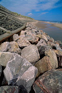 Purposefully placed boulders to prevent dune undercutting and coastal erosion, Montrose, Scotland, UK  -  Niall Benvie