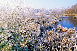 Winter frosty wetland landscape of Ellertsveld, Mantingerveld, The Netherlands  -  Flip de Nooyer