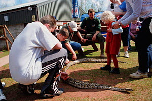 Burmese python being handled as part of interactive zoo talk {Python molurus bivittatus} UK  -  Nick Barwick
