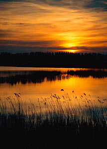 Evening sunset view across fen with open water, Strumpshaw Fen RSPB Reserve, Norfolk, UK  -  Nick Barwick